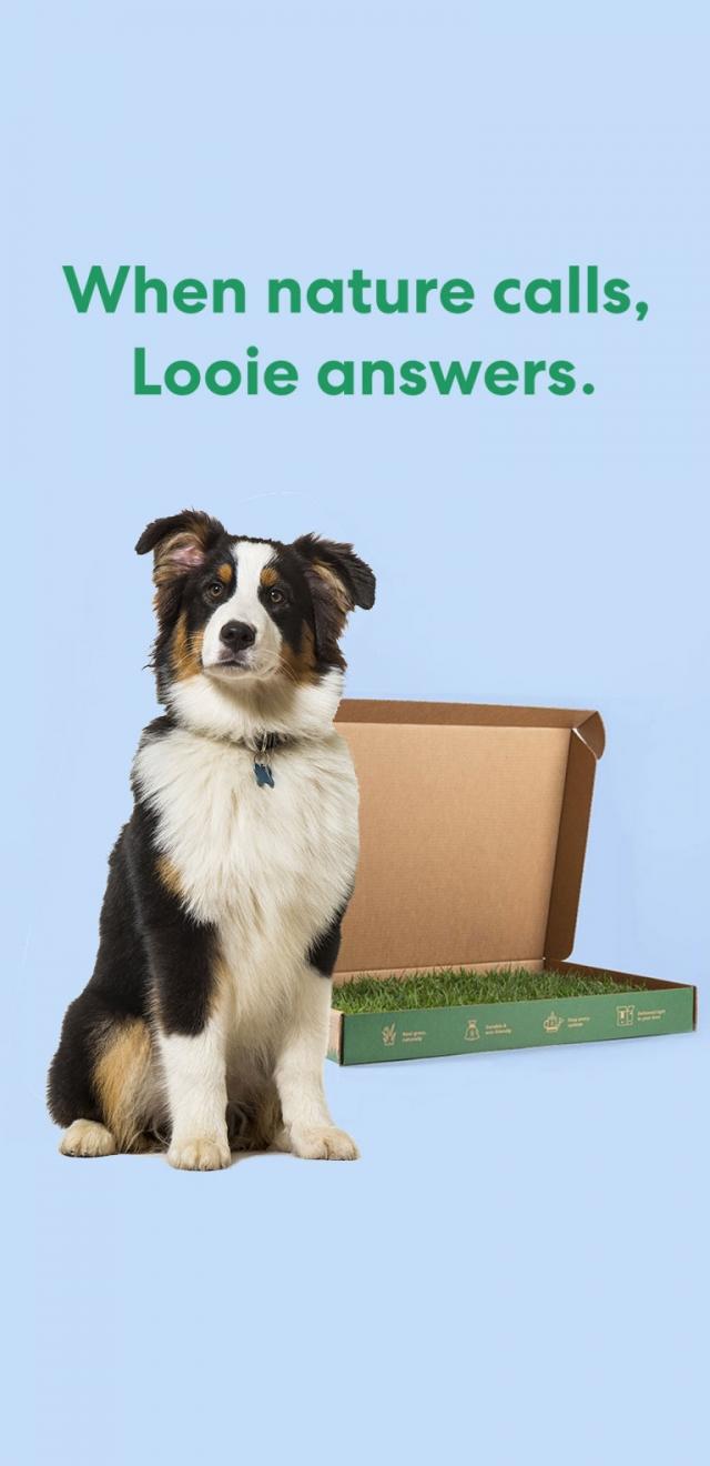 pet product branding