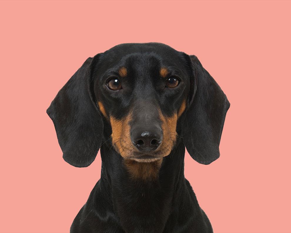 pet food branding